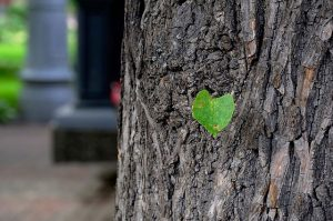 green-14019_640